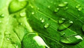 leafdroplet